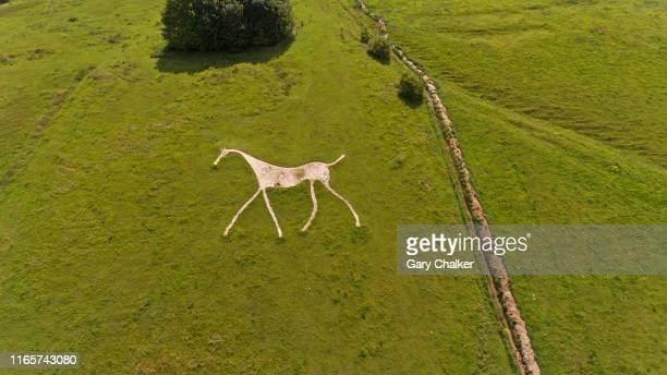 chalk white horse at hackpen hill - ウィルトシャー州 ストックフォトと画像