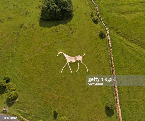 chalk white horse at hackpen hill - 炭酸石灰 ストックフォトと画像
