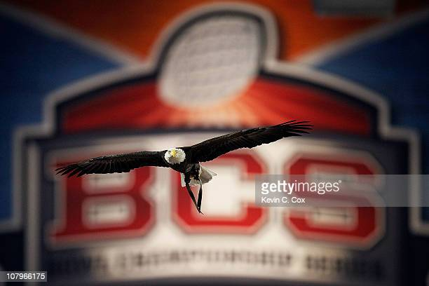 Challenger, a Bald Eagle circles the stadium during the national anthem for the Tostitos BCS National Championship Game between the Oregon Ducks and...