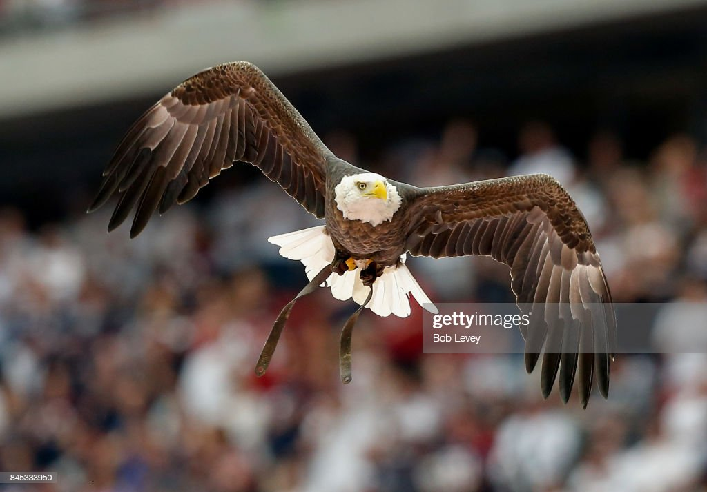 Challenger America's Famous Free-Flying Bald Eagle flies during the national anthem before the game between the Jacksonville Jaguars and Houston Texans at NRG Stadium on September 10, 2017 in Houston, Texas.