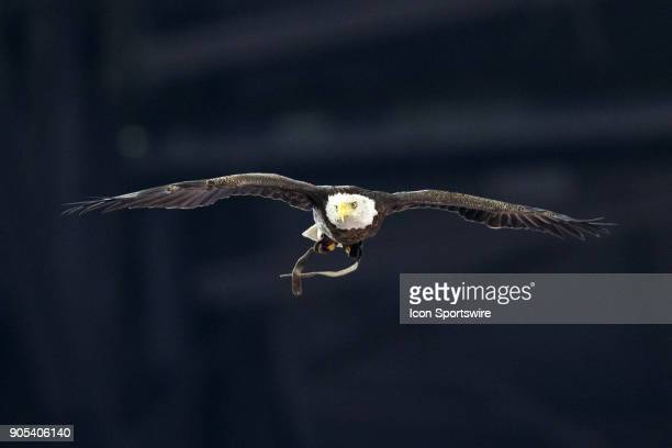 Challenger the bald eagle flies over the field during the national anthem during the Cotton Bowl Classic matchup between the USC Trojans and Ohio...