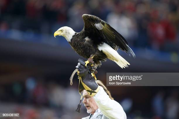 Challenger the bald eagle lands after flying over the field during the national anthem during the Cotton Bowl Classic matchup between the USC Trojans...