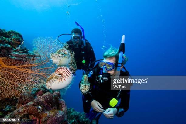 Chambered nautilus Nautilus pompilius and divers Palau Micronesia