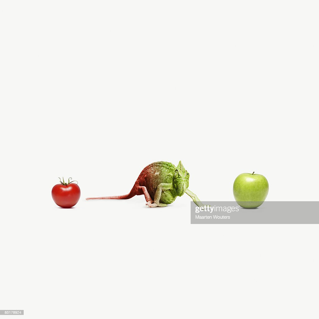 chameleon standing between an apple and a tomato : Stock Photo