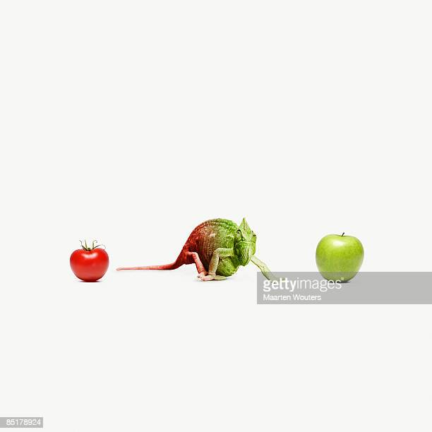 chameleon standing between an apple and a tomato