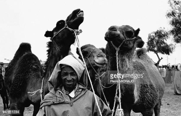 Chamelier au Maroc