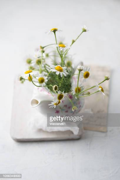 chamomile flowers in a tea pot - chamomile tea stock photos and pictures