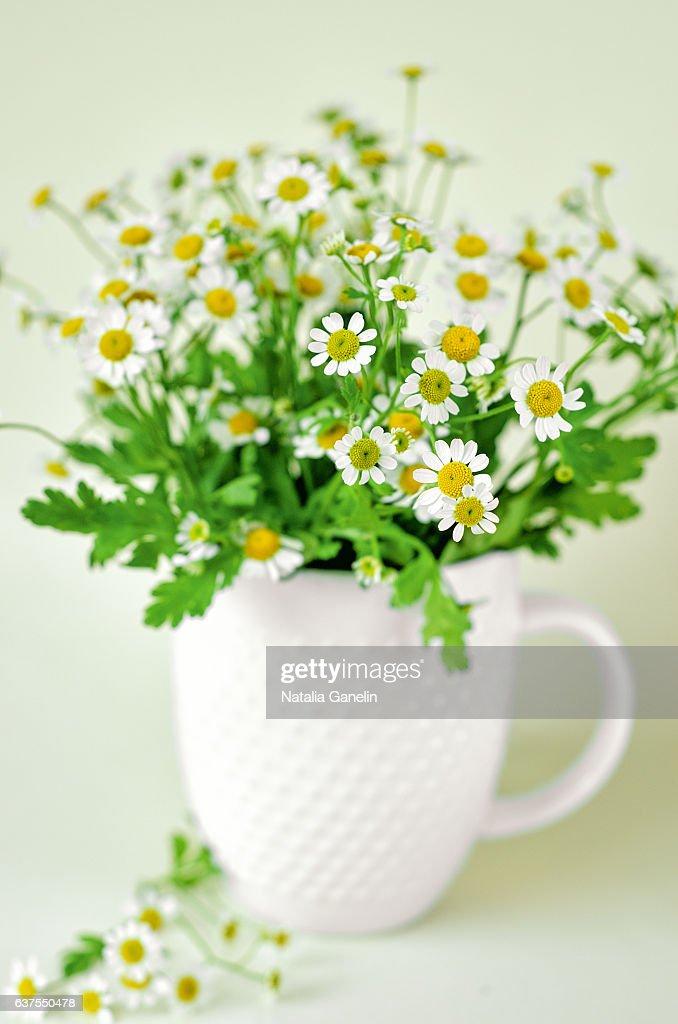 Chamomiles in white mug : Stock Photo