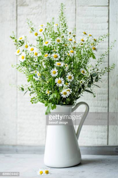 chamomille flowers in an enamel jug - chamomile tea stock photos and pictures