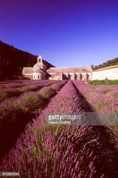 Champ de lavande devant l'abbaye NotreDame de Senanque a Gordes dans le Vaucluse France