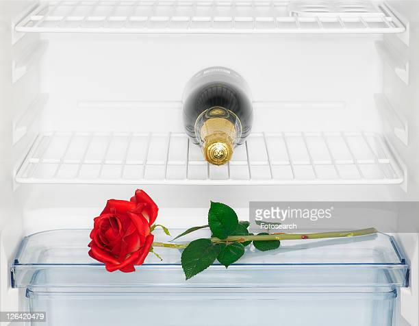 Champagne and rose in fridge (close-up)