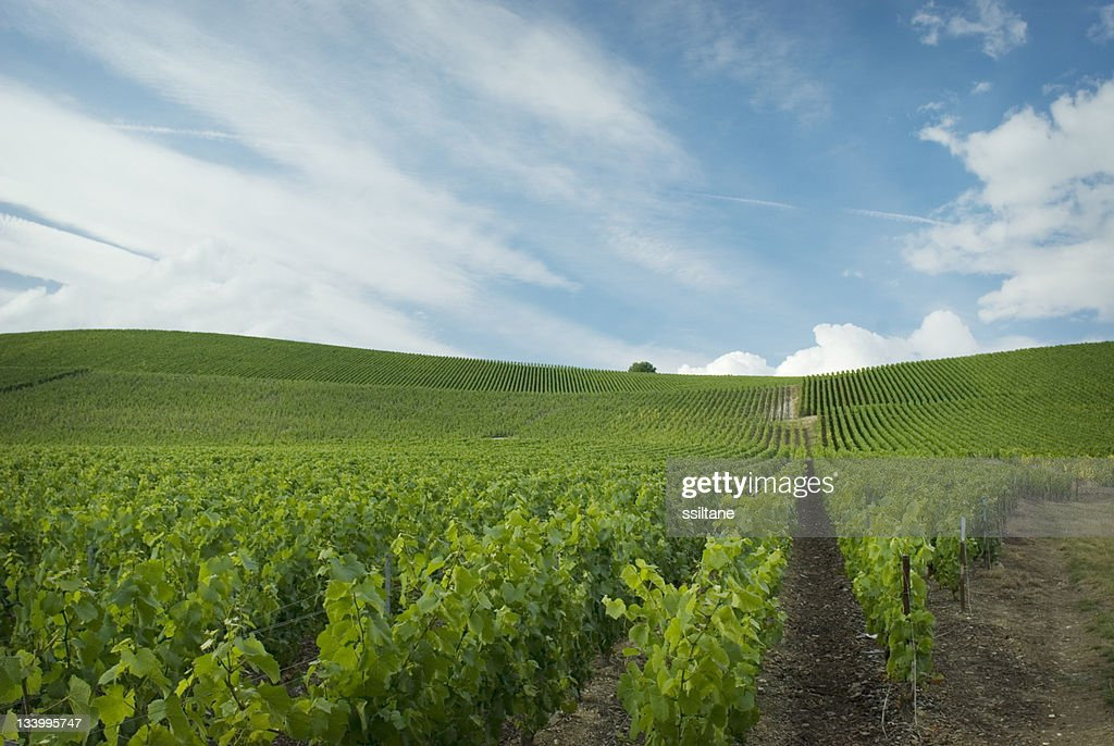 Champagne France : Stock Photo