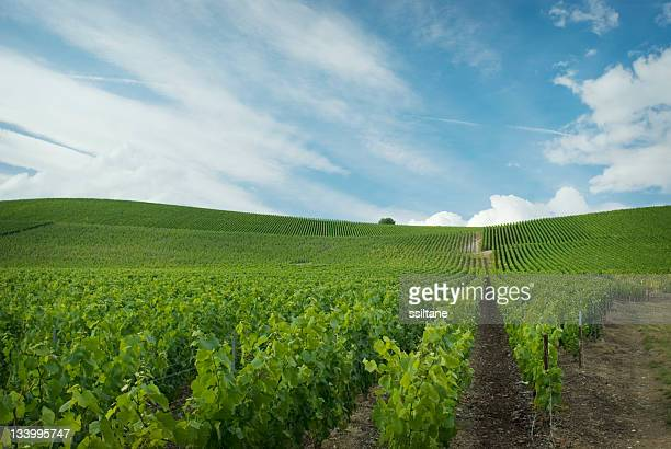 champagne france - campania stock pictures, royalty-free photos & images