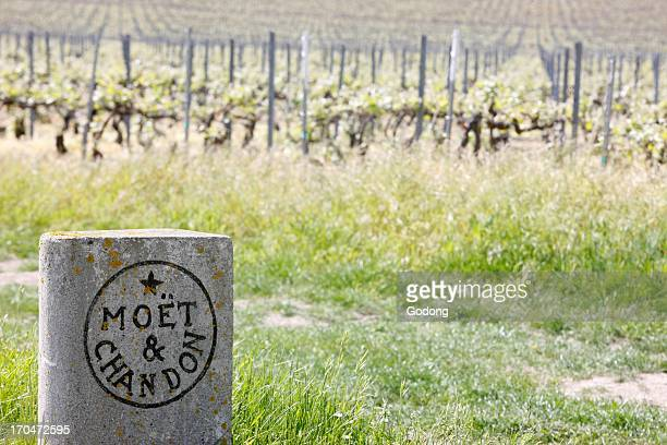 Champagne vineyard Moet et Chandon France