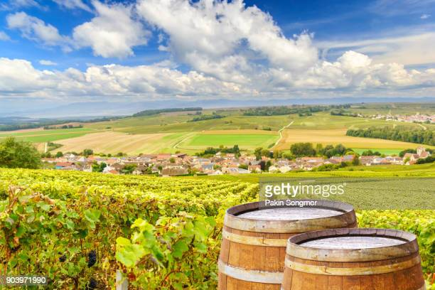 champagne vineyards with old wooden barre - chardonnay grape stock photos and pictures