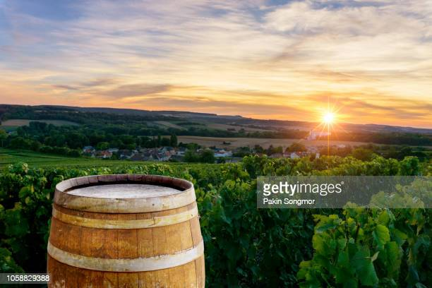 champagne vineyards with old wooden barrel on row vine green grape in champagne vineyards background at montagne de reims - chardonnay grape - fotografias e filmes do acervo