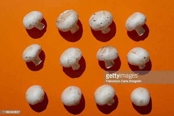 champignon mushroom - edible mushroom stock pictures, royalty-free photos & images