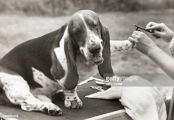 Dog Manicure Stock Photos And Pictures Getty Images
