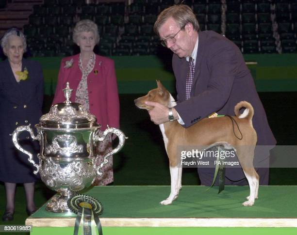 Champion Jethard Cidevant the Basenji known as Sid with owner Paul Singleton from Colchester Essex after being named a Supreme Champion at this...