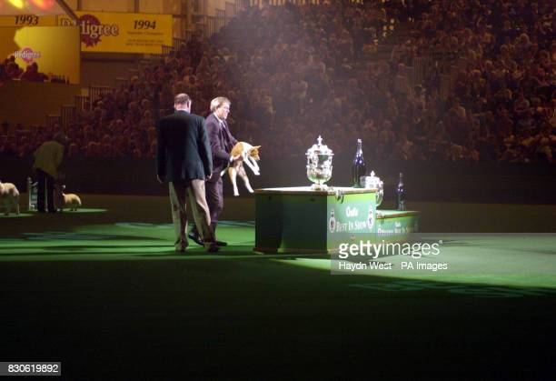 Champion Jethard Cidevant the Basenji known as Sid with owner Paul Singleton from Colchester Essex after being named a Supreme Champion at the Crufts...