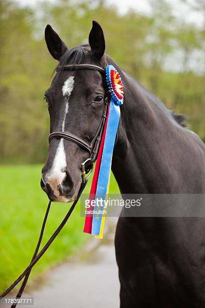 champion - best in show stock pictures, royalty-free photos & images
