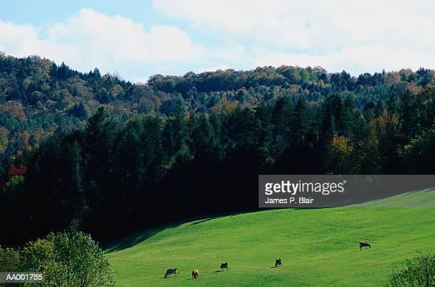 Champlain Valley Farm Below the Green Mountains