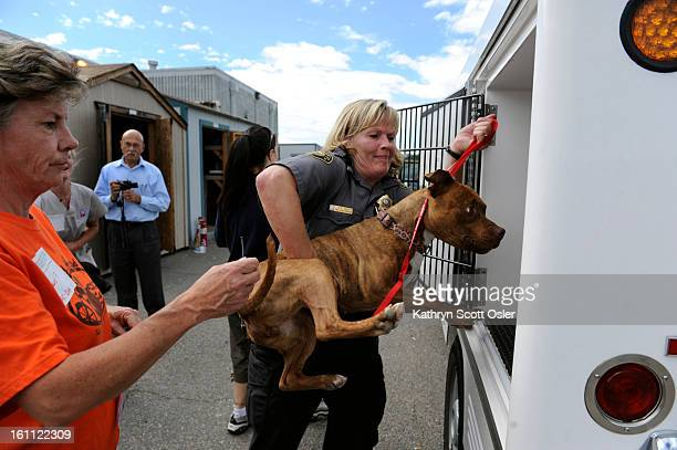 Chana Guy center Jefferson County Animal Control Supervisor gets a helping hand from volunteer Julie Porter as she loads a Staffordshire Terrier mix...