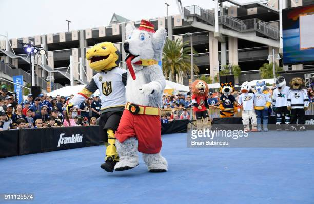 Chance of the Vegas Golden Knights and Harvey the Hound of the Calgary Flames compete during the PreGame Mascot Showdown at Amalie Arena on January...