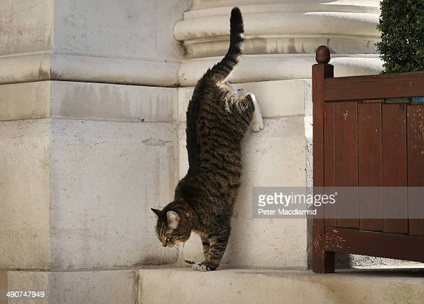 Chancellor of the Exchequer George Osborne's tabby cat Freya jumps down from a wall as foreign ministers arrive at the Foreign and Commonwealth...