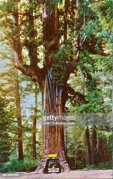 Drive Thru Tree Stock Photos and Pictures | Getty Images