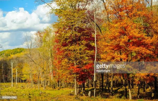 Changbaishan mountain scenery in autumn,Jilin Province,China.