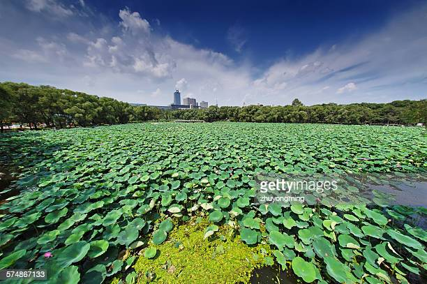 Changchun South lake Park