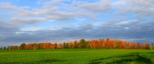 Changing Fall Trees in Hedgerow and Green Field
