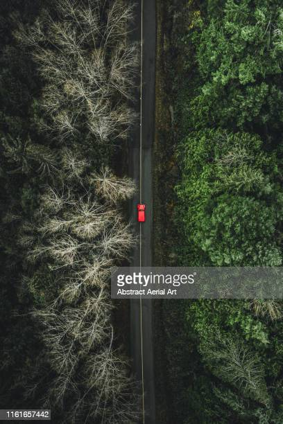 changing seasons, canada - forest road stock pictures, royalty-free photos & images