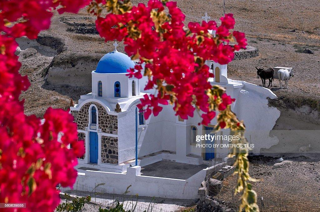 Chapel at Santorini and little donkeys : ストックフォト