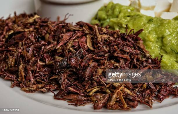 Chapulines are an ingredient for making tacos with guacamole Oaxaca cheese and chili sauce a creation of chef Alejandro Pinon at Los Danzantes...