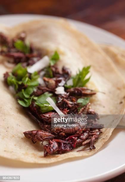 Chapulines or Grasshopper Taco Mercado Benito Juarez Oaxaca City Oaxaca Mexico