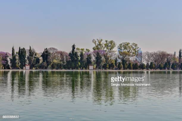 chapultepec forest and lake - mexico city, mexico - chapultepec park stock photos and pictures