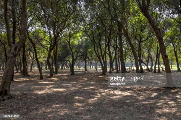 Chapultepec park forest