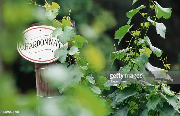 Chardonnay sign near Pokolbin.