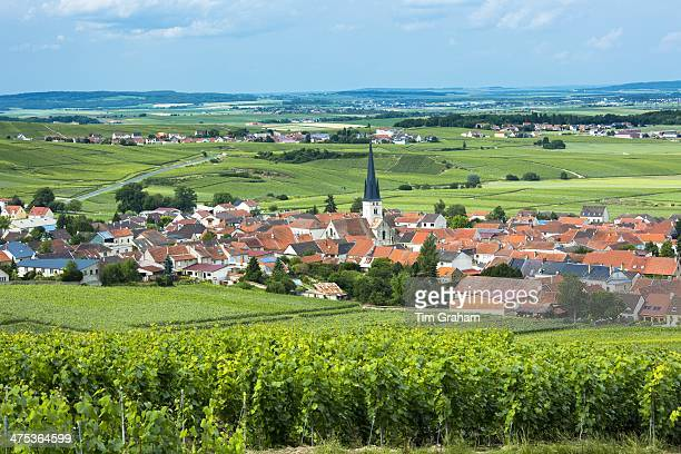Chardonnay vines at the village of Chamery in the ChampagneArdenne region of France