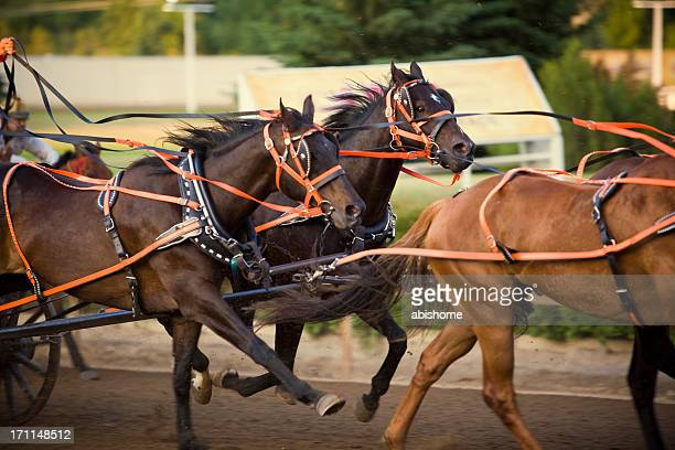 charging horses - calgary stampede stock pictures, royalty-free photos & images
