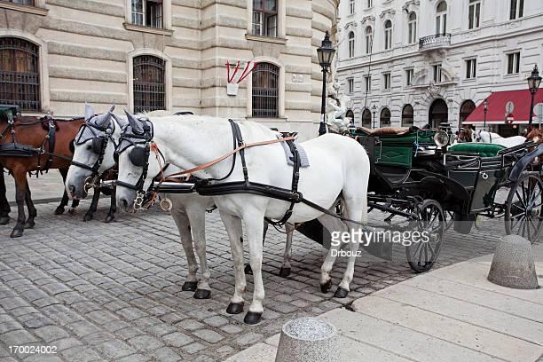 chariots - pferdeantrieb stock-fotos und bilder