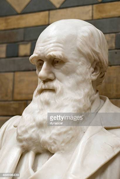 charles darwin statue, natural history museum, london - charles darwin stock pictures, royalty-free photos & images