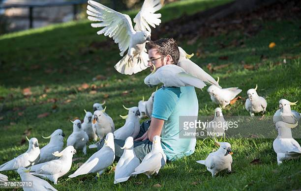 Charles Precht aged 19 from the US with cockatoos in the Royal Botanical Gardens on July 22 2016 in Sydney Australia Sydney recorded its hottest July...