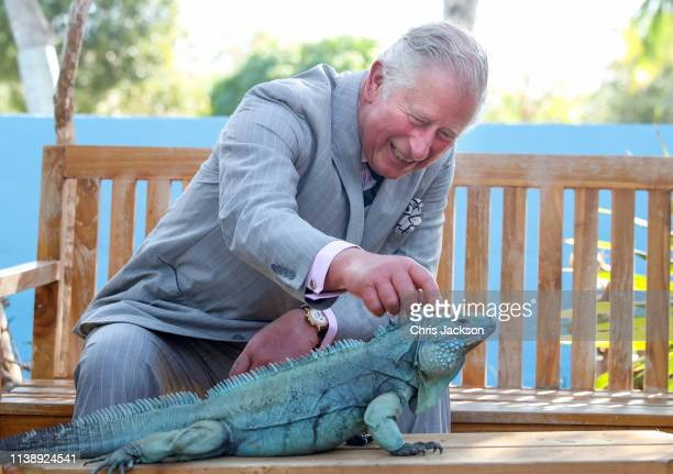 Charles Prince Of Wales strokes a blue iguana called Peter at the Queen Elizabeth II Royal Botanic Park on March 28 2019 in Grand Cayman Cayman...