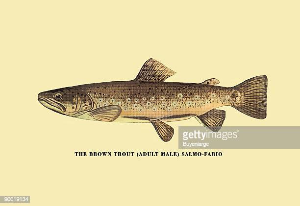 Charles Zibeon Southard penned a book about Trout fishing in America and this illustration showed one of the species.