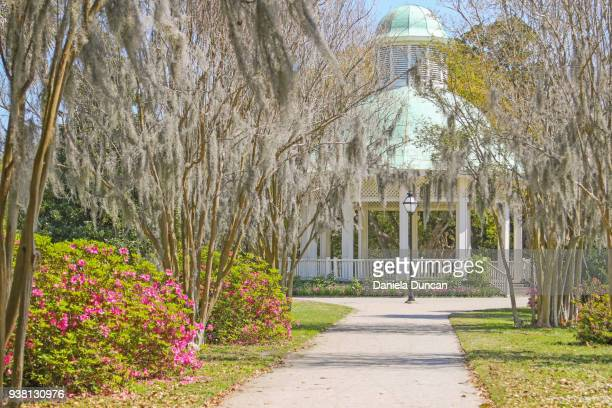 charleston in the spring - crepe myrtle tree stock pictures, royalty-free photos & images