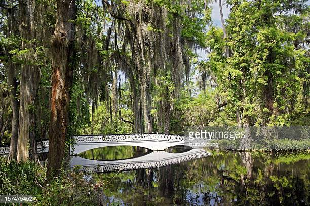 charleston magnolia plantation white bridge - template_talk:south_carolina stock pictures, royalty-free photos & images