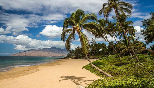 Charlie Young Beach Maui, Hawaii Wall Art